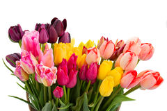 Bunch of multicolored tulips flowers close up Stock Photos