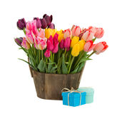 Bunch of multicolored tulips flowers Stock Photography