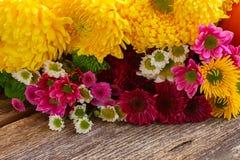 Bunch of mum flowers Royalty Free Stock Photo