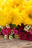 Bunch of mum flowers Royalty Free Stock Photography