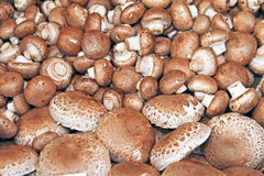 Bunch of mushrooms Royalty Free Stock Photos