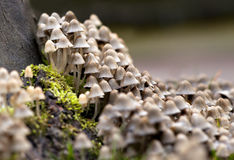 Bunch of mushrooms Stock Image