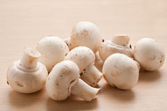 Bunch of mushrooms. Stock Photography