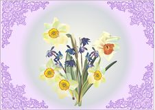 Bunch of narcissus in lilac frame Stock Photo