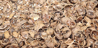 Bunch of nut shells without the kernel Stock Photography
