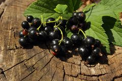 Bunch Of Black Currant Royalty Free Stock Photos