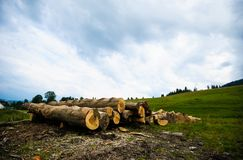 Free Bunch Of Felled Tree Stock Photos - 166230153