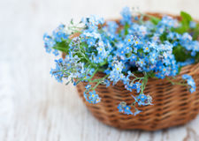 Bunch Of Forget-me-nots Flowers