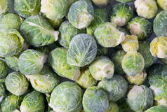 Free Bunch Of Frozen Sprouts Stock Photos - 50873383