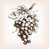 Bunch Of Grapes Hand Drawn Sketch Style Vector Royalty Free Stock Photos