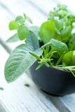 Bunch Of Herbs Stock Photography