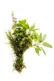 Bunch Of Herbs On White Royalty Free Stock Images