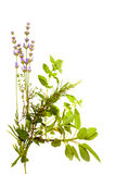 Bunch Of Herbs On White Stock Photography