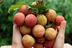 Free Bunch Of Litchi Fruit Or Lychee Fruits Stock Images - 94357524