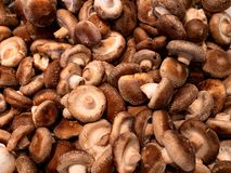 Free Bunch Of Loose Shitake Mushrooms For Sale In The Market Top View Royalty Free Stock Photo - 156541875