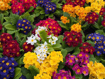 Bunch Of Multi Colored Flowers Arranged Together Stock Photo