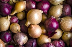 Free Bunch Of Onions In The Vegetable Section Of Shop Or At Home In The Pantry. Golden Heads Of Raw Uncleaned Bulbs In Yellow, Red And Stock Photo - 172813580