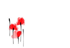 Free Bunch Of Poppies Royalty Free Stock Photography - 11989757