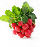 Bunch Of Radishes Stock Images