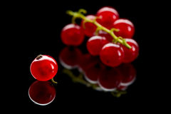Bunch and one berry of red currant Royalty Free Stock Photography