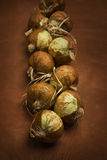 Bunch of onions Royalty Free Stock Photos