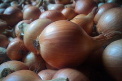Bunch of onions Stock Images
