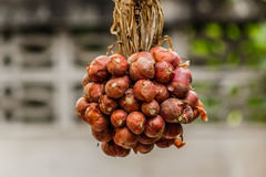 Bunch of onions in a clump of colorful Stock Image