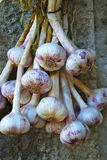 Bunch of Onions Tied Together Stock Photography