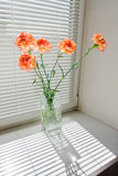 Bunch of orange carnation Royalty Free Stock Image