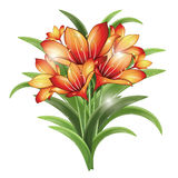 Bunch of orange lilies Stock Photography