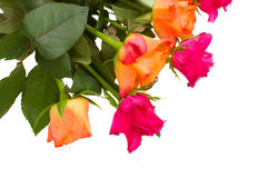Bunch of orange and pink  roses Royalty Free Stock Image