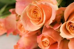 Bunch of orange roses. On white background Stock Photos