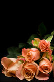 Bunch of orange roses. Over black Stock Photos