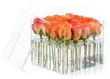 Bunch of orange roses in container over white Royalty Free Stock Photo