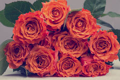 Bunch of Orange Roses Flower with Green Leaves Stock Photography