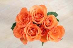 Bunch of roses view from above. royalty free stock image