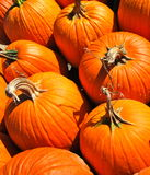 Bunch of orange round pumpkins Royalty Free Stock Images
