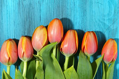 A bunch of orange Tulips Royalty Free Stock Photos