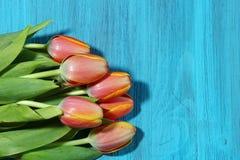 A bunch of orange Tulips Stock Image
