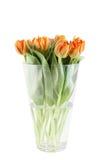 Bunch of orange tulips Stock Images