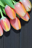 A bunch of orange Tulips Stock Images