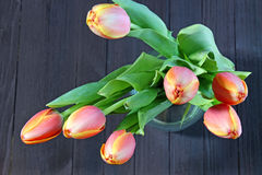 A bunch of orange Tulips Royalty Free Stock Photography