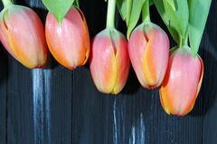 A bunch of orange Tulips. On a dark wooden background with copy space, selective focus Stock Photo
