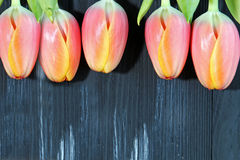 A bunch of orange Tulips Royalty Free Stock Photo