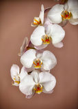 Bunch of orchid flowers on brown background Stock Images