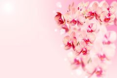 Bunch of orchids flowers on blurred background Royalty Free Stock Photo
