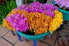 Bunch of orchids. Outdoor orchid sales in street market, Bangkok, Thailand royalty free stock images
