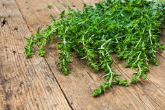 Bunch of oregano Royalty Free Stock Photo