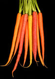 Bunch of organic carrots in different colors isolated on black Royalty Free Stock Photo