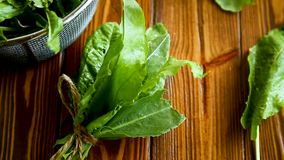 Bunch of organic fresh green sorrel, on a table. stock video footage